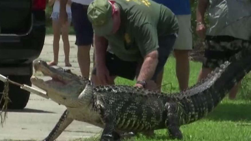Alligator 'ate toes off' of Florida man who bathed in pond, report says