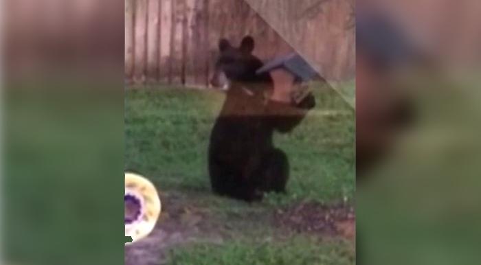 bear-bird-feeder