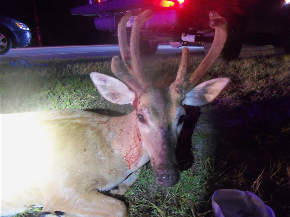 buck keys deer