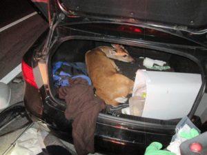deer trunk keys