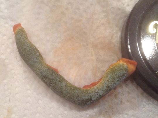 A Fort Myers woman said she found an iguana leg in her pizza sauce but the maker of the sauce said he substance was really just mold. (Photo: Special to The News-Press)