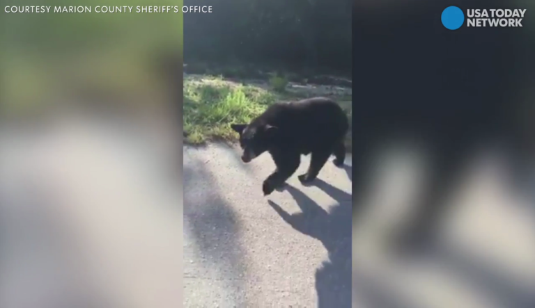 bear-mcso-encounters