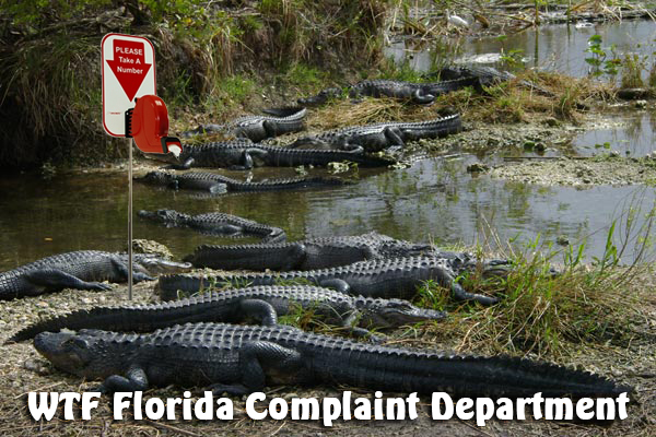 complaint-department alligators
