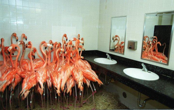 flamingos-miami-floyd