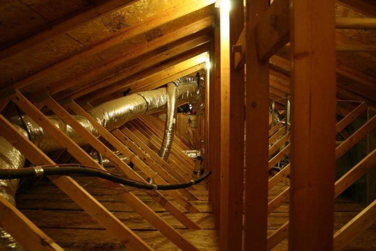 snake attic