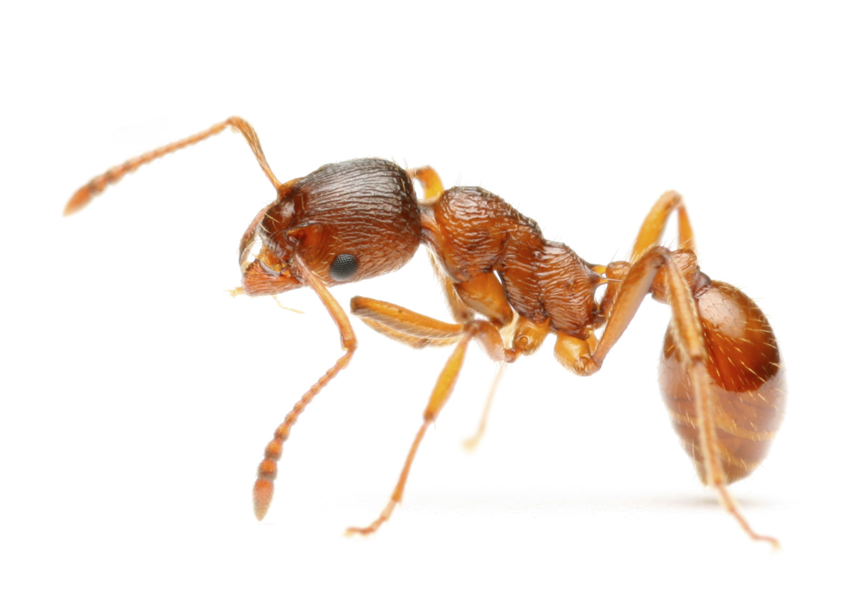Fire Ants Attack a Tampa Man in SUV, Causing Vehicle to ...