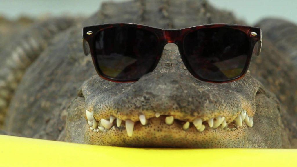 beach-gator-1