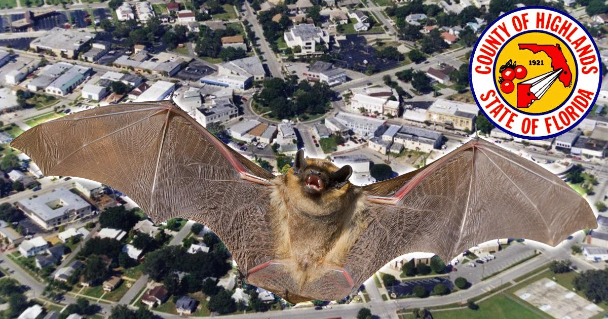 rabies-bat-sebring