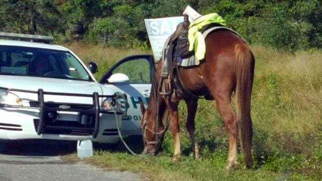 horse dui lakeland polk