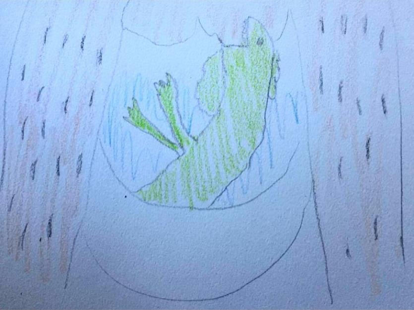 iguana sketch toilet