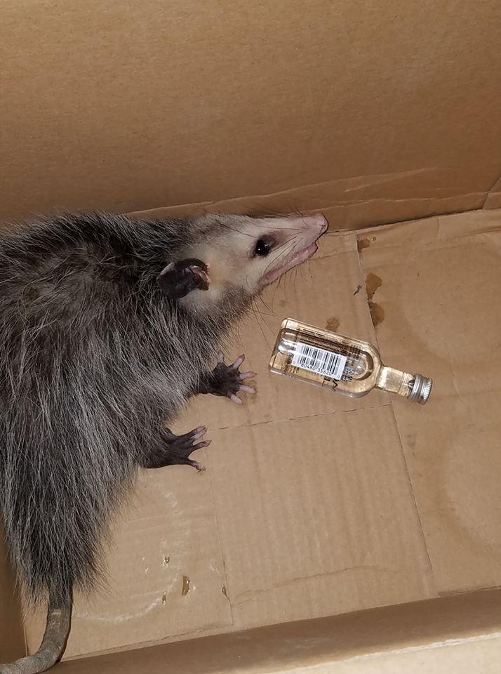 opossum liquor store