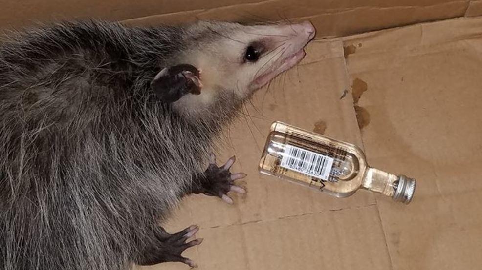 possum liquor store