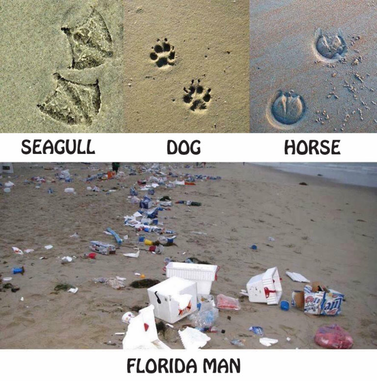 florida-man-beach-creatures