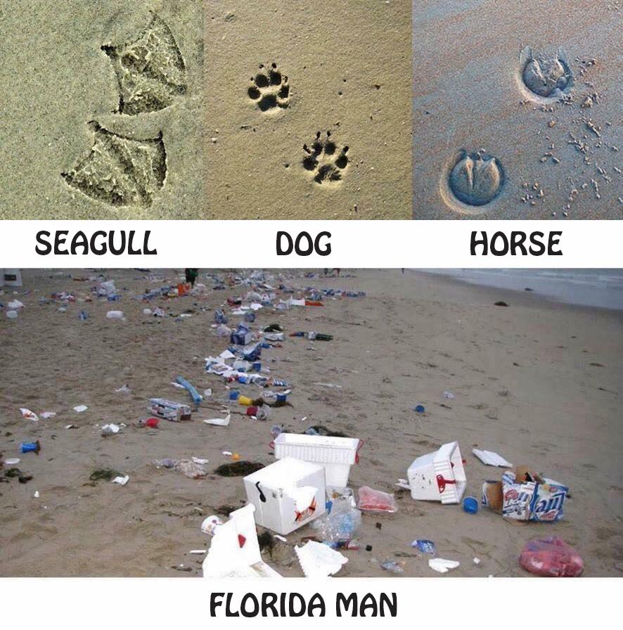 florida-man-beach-creatures