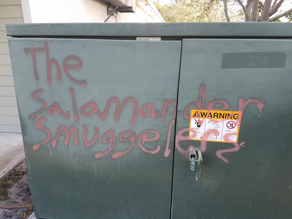 salamander-smugglers